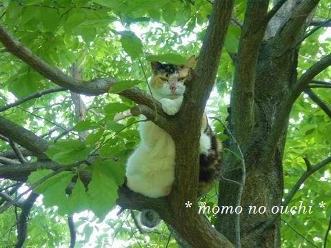 チシャ猫1.jpg