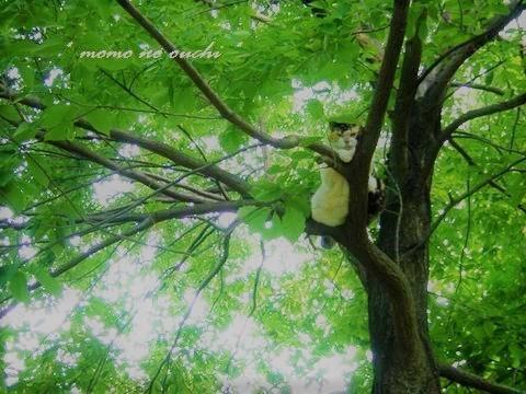 チシャ猫2.jpg